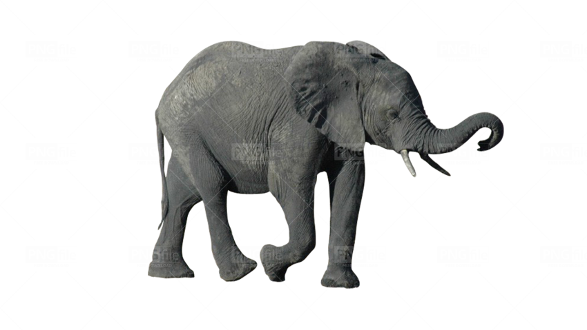 Elephant Png Free Download Photo 5 Pngfile Net Free Png Images Download Elephant png, download png alpha channel clipart images (pictures) with transparent background, elephant png image: elephant png free download photo 5