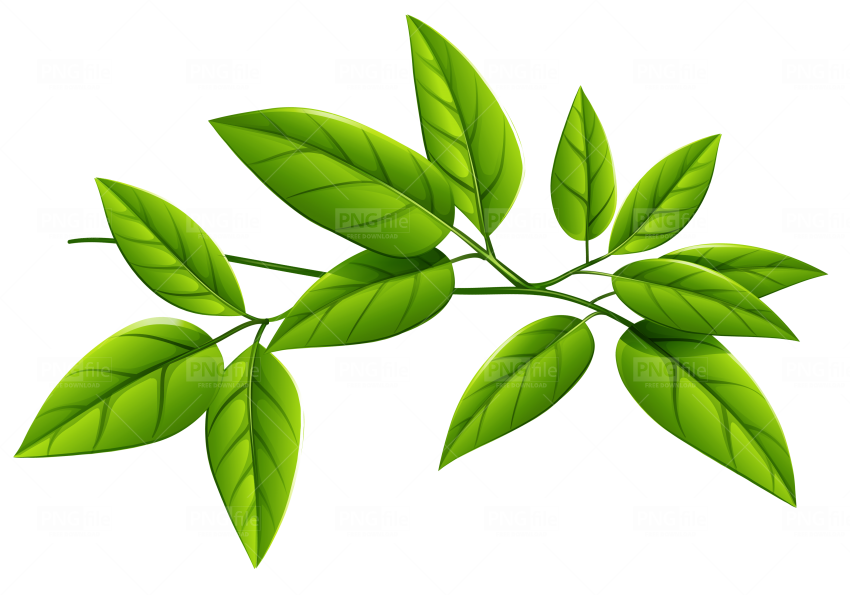 Green Leaves Png Free Download - Photo #218 - PngFile.net ...